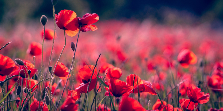5 facts about remembrance day