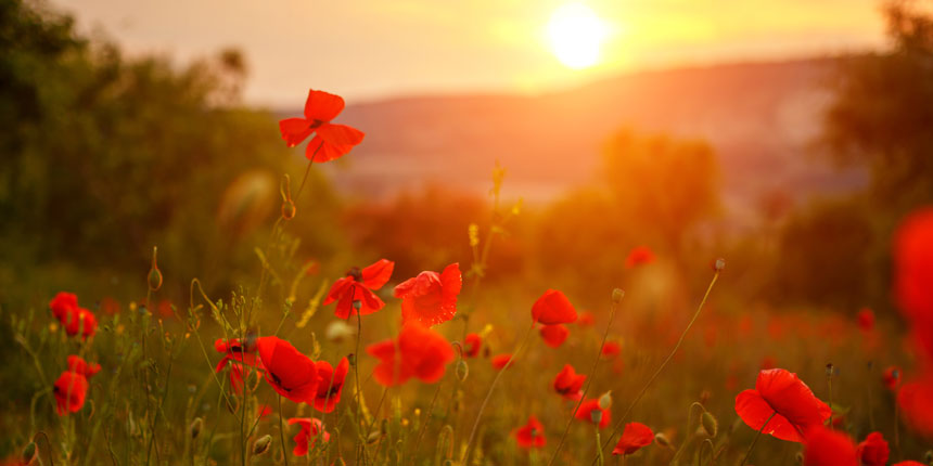 Funeral directors and Remembrance Day